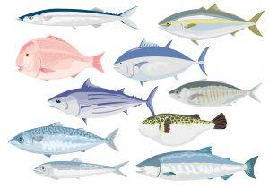 毛細血管 美肌を作る お魚を食べる