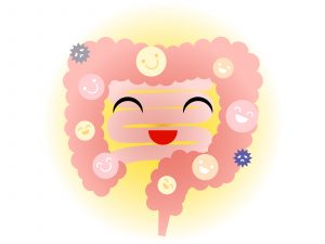 毛細血管 美肌を作る 腸内環境を整える