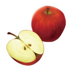 美肌と健康 りんご