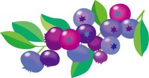糖化 酸化 食べ物 ブルーベリー