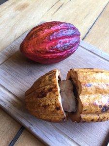 更年期障害改善 チョコレート カカオポリフェノール