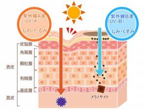 50代女性 日焼けケア 紫外線UVA・UVB 美白
