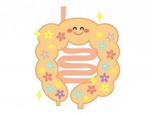 50代女性 腸内フローラ 腸内環境 免疫力アップ 乳酸菌
