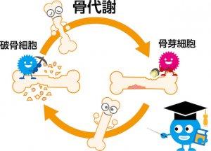骨代謝のイメージの絵